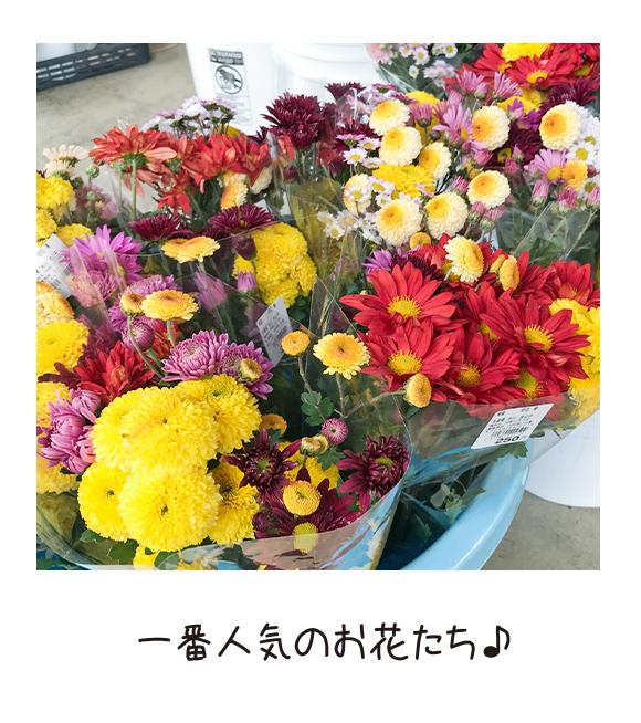 一番人気のお花たち!